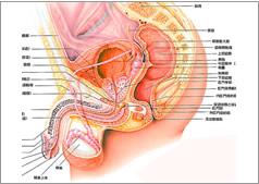 陰茎がん|癌治療に迷ったらがん...